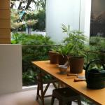 3BR + Study Kitchen Balcony